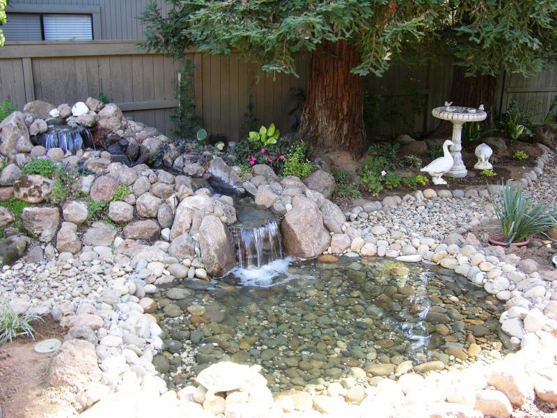 Now Dorothy is even more delighted! This is her new water garden.